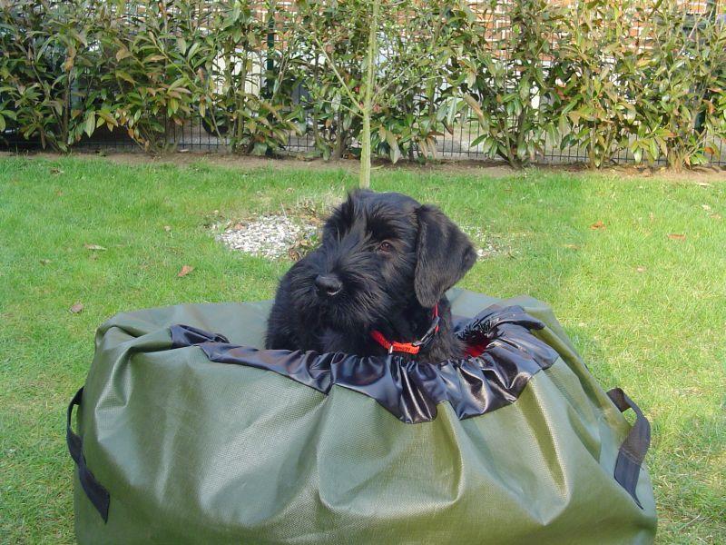Cleo mit Tasche